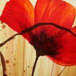 hoa poppy m2358-1