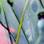 hoa poppy m2363-1