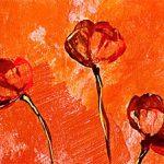 hoa poppy m2365-1