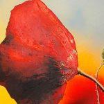 hoa poppy m2367-1