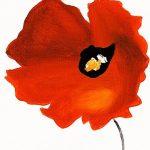 hoa poppy m2376-2