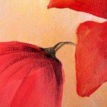 hoa poppy m2377-1