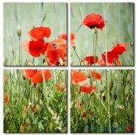 Poppy Khoe Sắc M2381