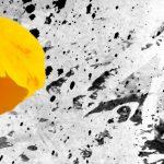 hoa poppy m2383-2