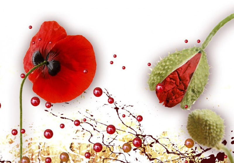 hoa poppy m2387-4