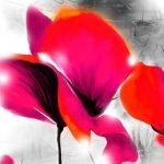 hoa poppy m2389-2