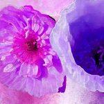 hoa poppy m2390-3