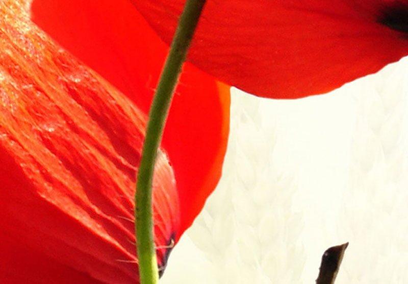 hoa poppy m2392-3