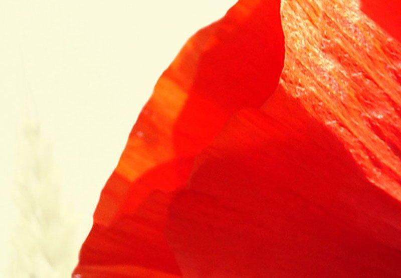 hoa poppy m2394-3
