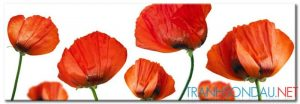 Poppy Khoe Sắc M2395