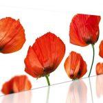 hoa poppy m2395-4